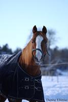 Darkhorse Dannielleh